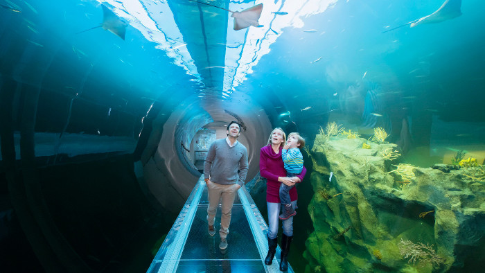 Atlantiktunnel im Haus des Meeres © Daniel Zupanc